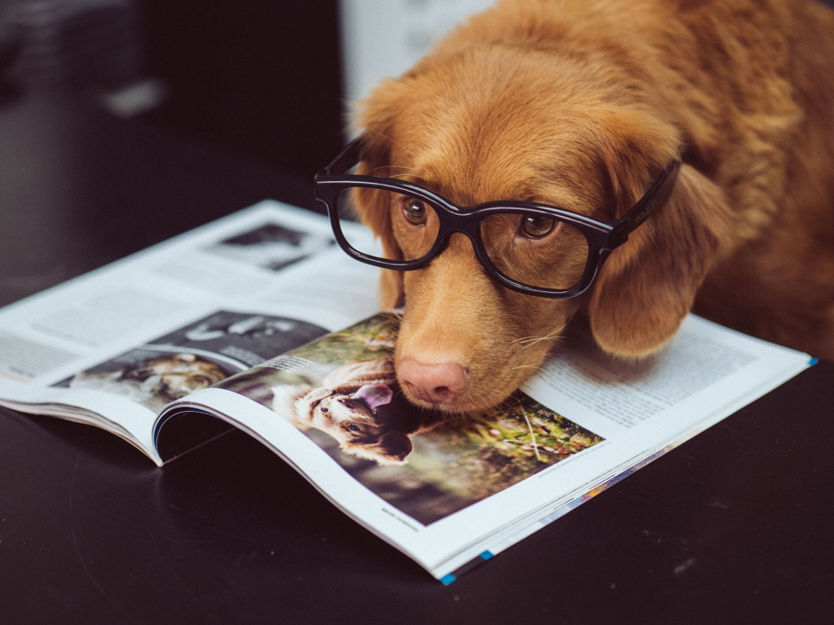 dog with glasses putting his head on a magazine